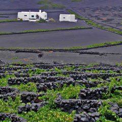 Tempranillo: kräftig, fruchtig, leicht, weich – Herz der spanischen Weinseele