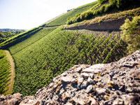 Dank der großen Bodenvielfalt an der Nahe, werden hier vielfältige Weine produziert.