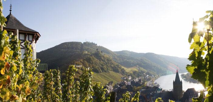 An der Mosel wird hauptsächlich Weißwein angebaut, bei Ihrer Weinreise werden Sie jedoch auch rote Rebstöcke finden.