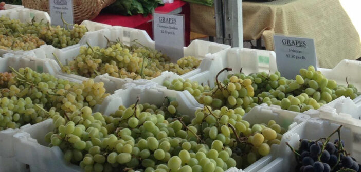 Kalifornische Weine: Weinanbau in Amerika