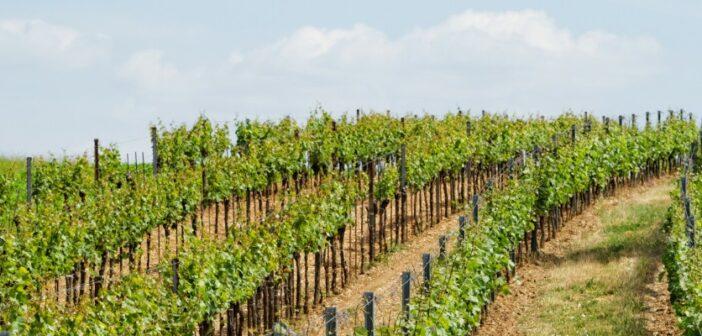Weingut Saaler aus Saulheim: Erfolg in München