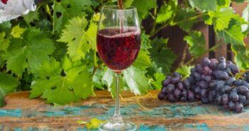 Pinot Noir: Alles Wissenswerte zur Rotweinsorte