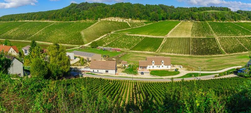 Der Pinot Noir stammt ursprünglich aus der nördlichsten Weinregion Frankreichs, die zu den führenden Weinanbaugebieten der Welt zählt: dem Burgund. (#01)