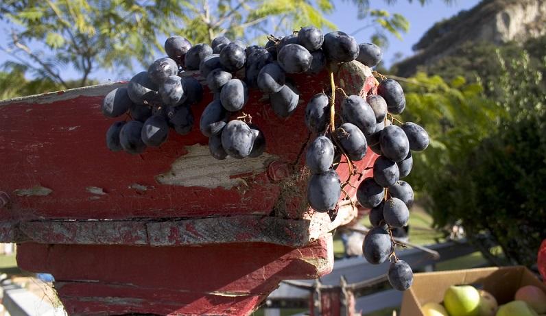 Noch eine kleine heitere Randbemerkung: Es existieren auf der Welt rund 400 Synonyme für den Pinot Noir, darunter Namen wie Blauburgunder, Pino Nero oder auch Karapino. (#03)
