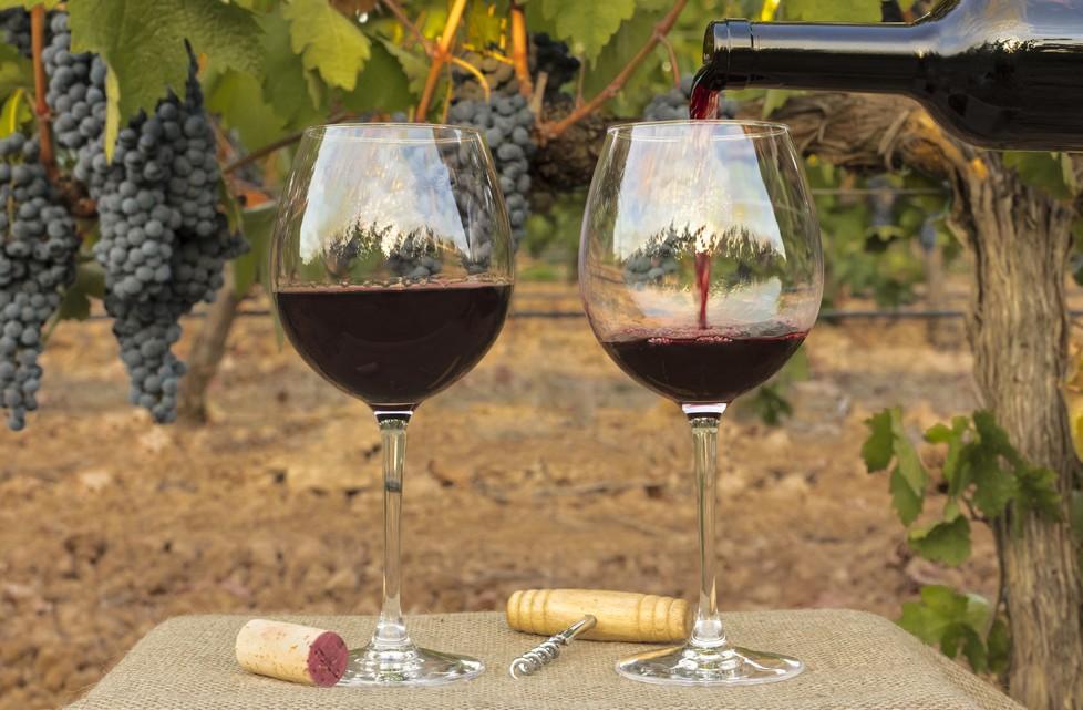 Der Acalon ist ein Besonderer, doch beileibe nicht der einzige Rotwein, der in Deutschland gedeiht. Generell unterliegen die Rebsorten, was die Nachfrage betrifft starken Schwankungen. Schnell ist eine neue Rebsorte en vogue und eine andere ist plötzlich nicht mehr angesagt.   (#2)